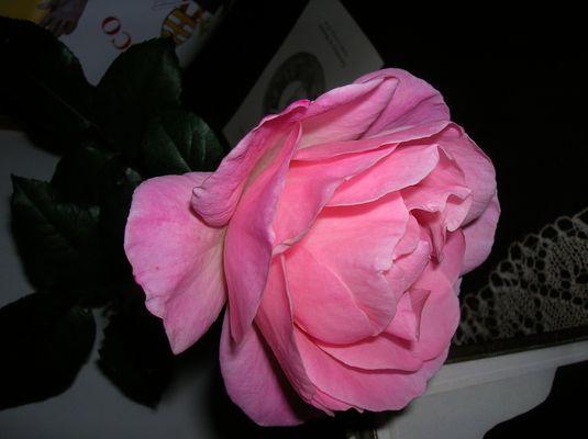 Vi offro una rosa