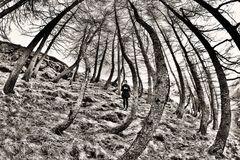 Viaggio nel bosco (1)