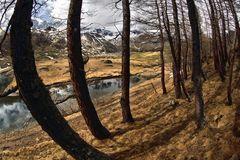 Viaggio nel bosco (2)