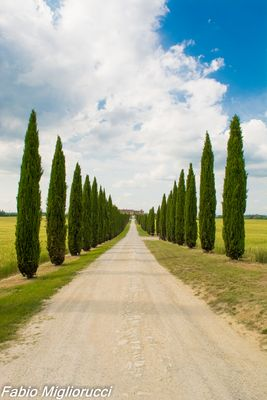 Viale in Vald'Orcia