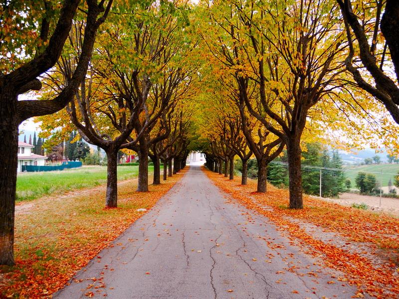 Vialetto d'autunno