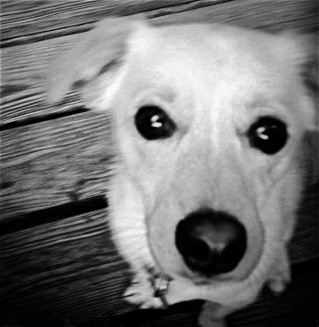 vicky's dog II