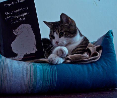 Vie et opinions philosphiques d'un chat
