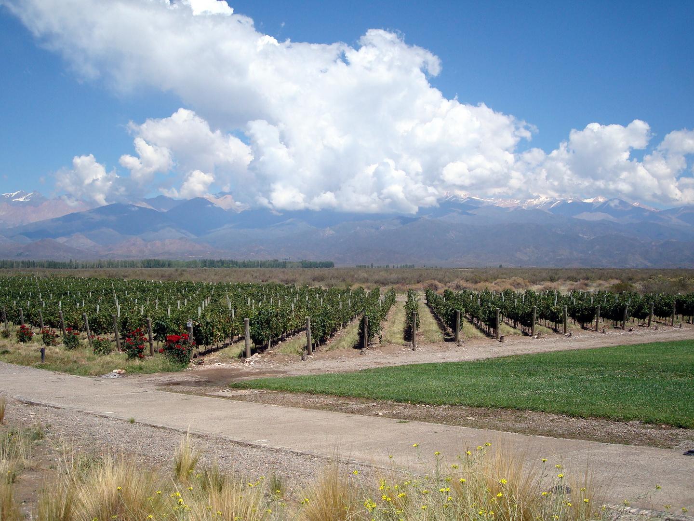 Viñedos de altura, Valle de Uco, Mendoza, Argentina