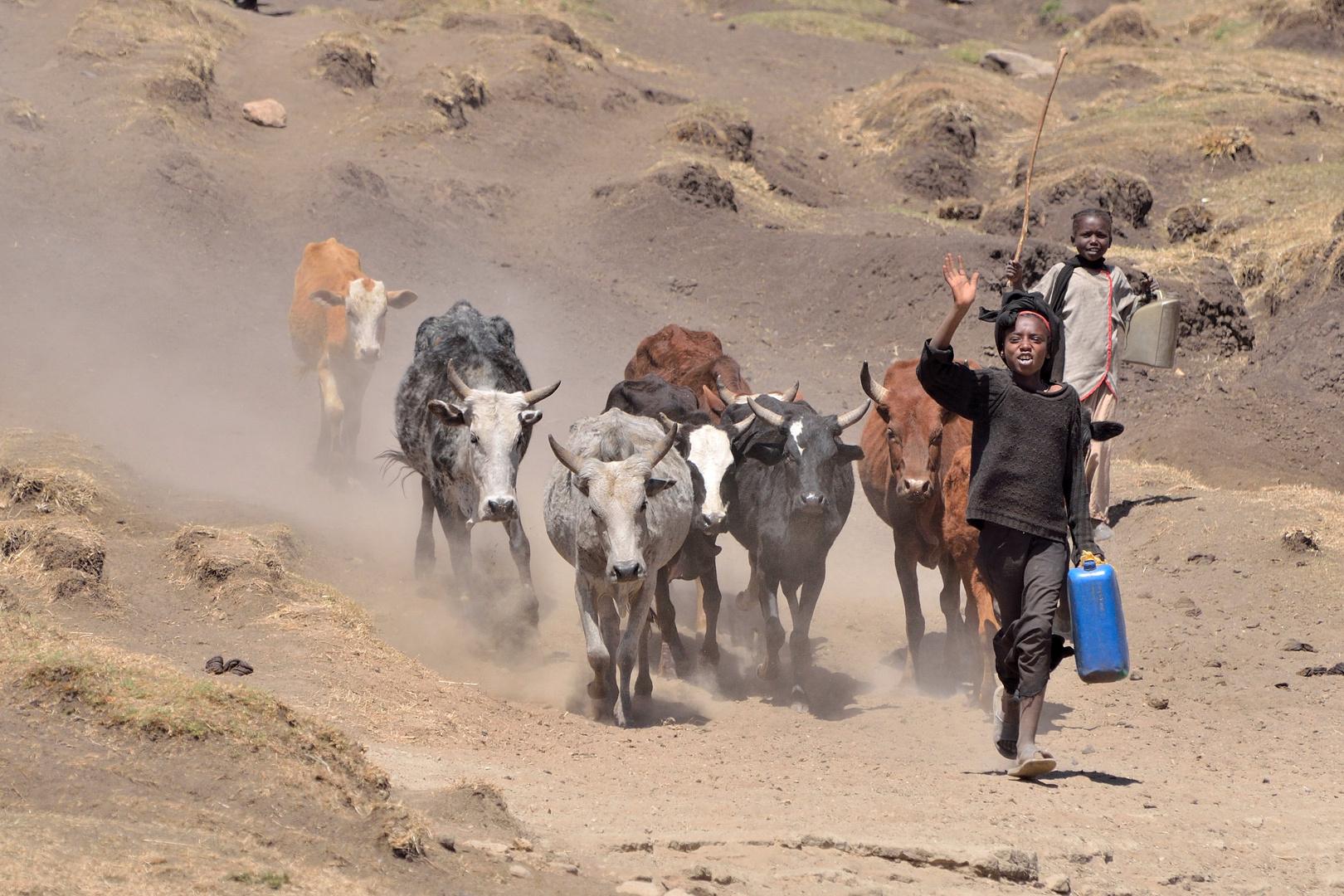 Vieh hütende Kinder in Äthiopien