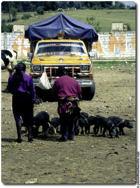 Viehmarkt in Sangolquí / Ecuador - 2