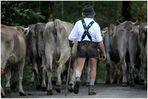 -Viehscheid 2013-