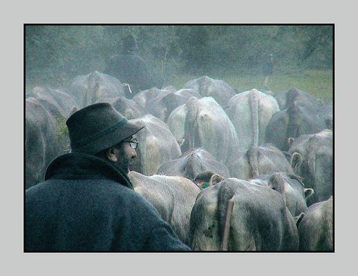 Viehscheid...