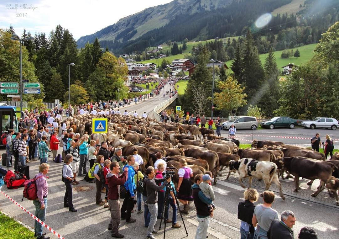 Viehscheid im Kleinwalsertal