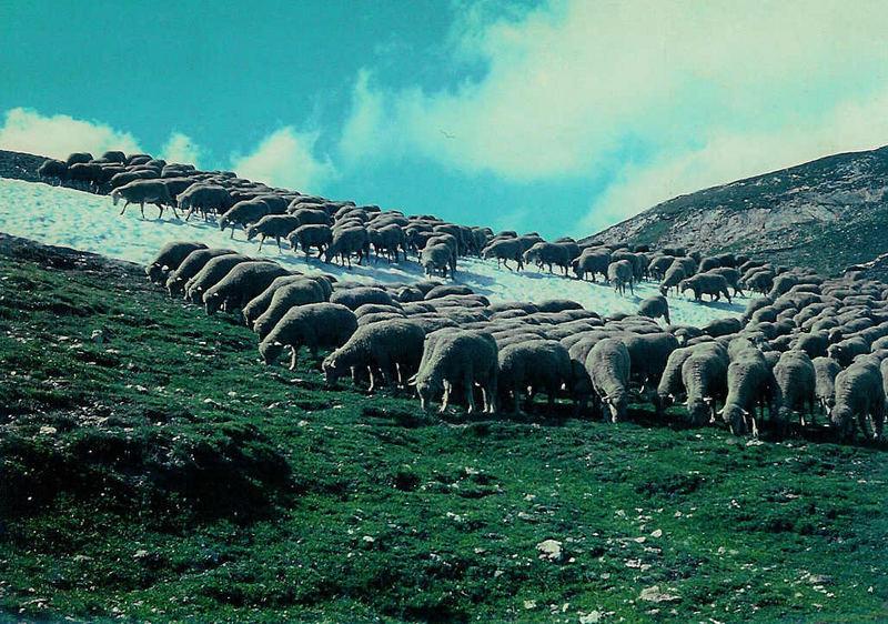 Viehzucht in hohen Regionen
