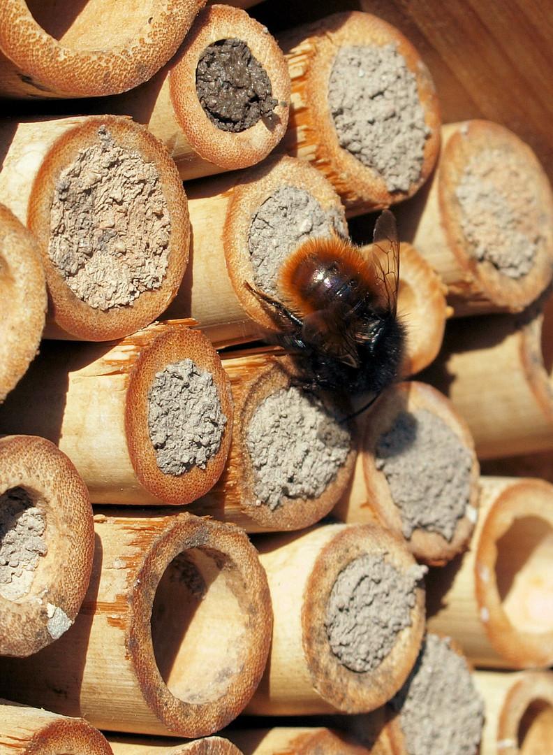 Viel Arbeit für die Bienen