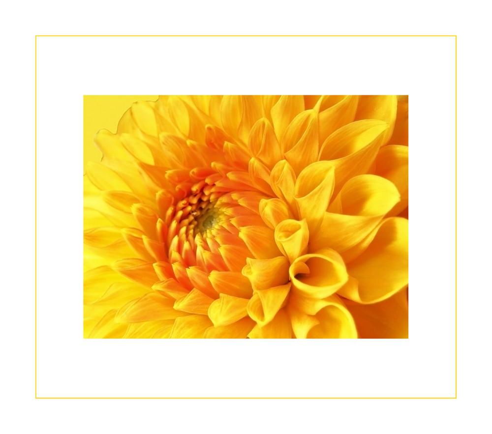viel gelb