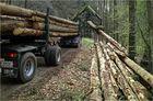 viel Holz ...