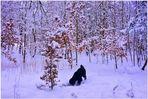 viel Schnee im Wald (mucha nieve en el bosque)