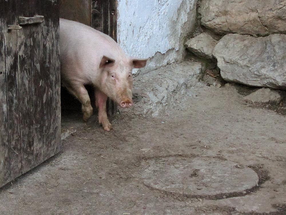 Viel Schwein 2009!