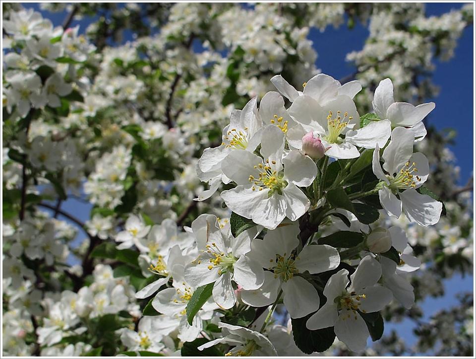 Viel tausend Blüten