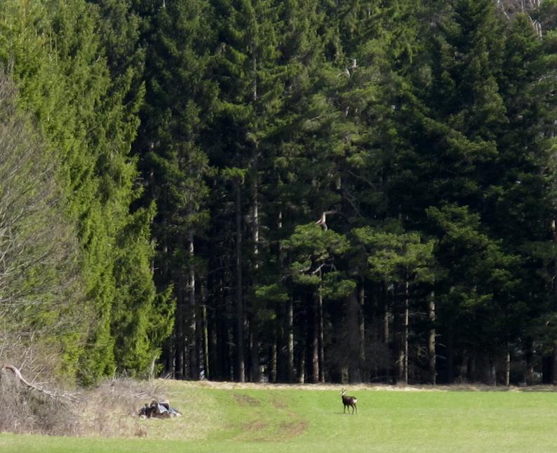 Viel Wald...