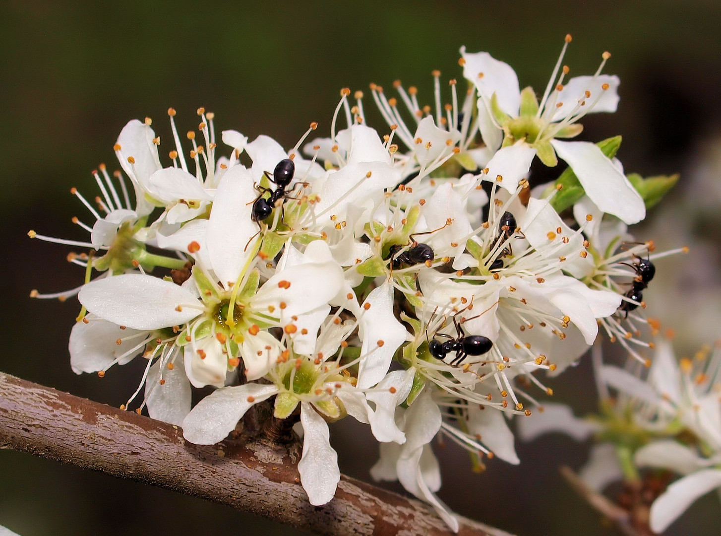 Viele Ameisen .... aber wie viele ?