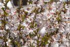 Viele, kleine Blüten!