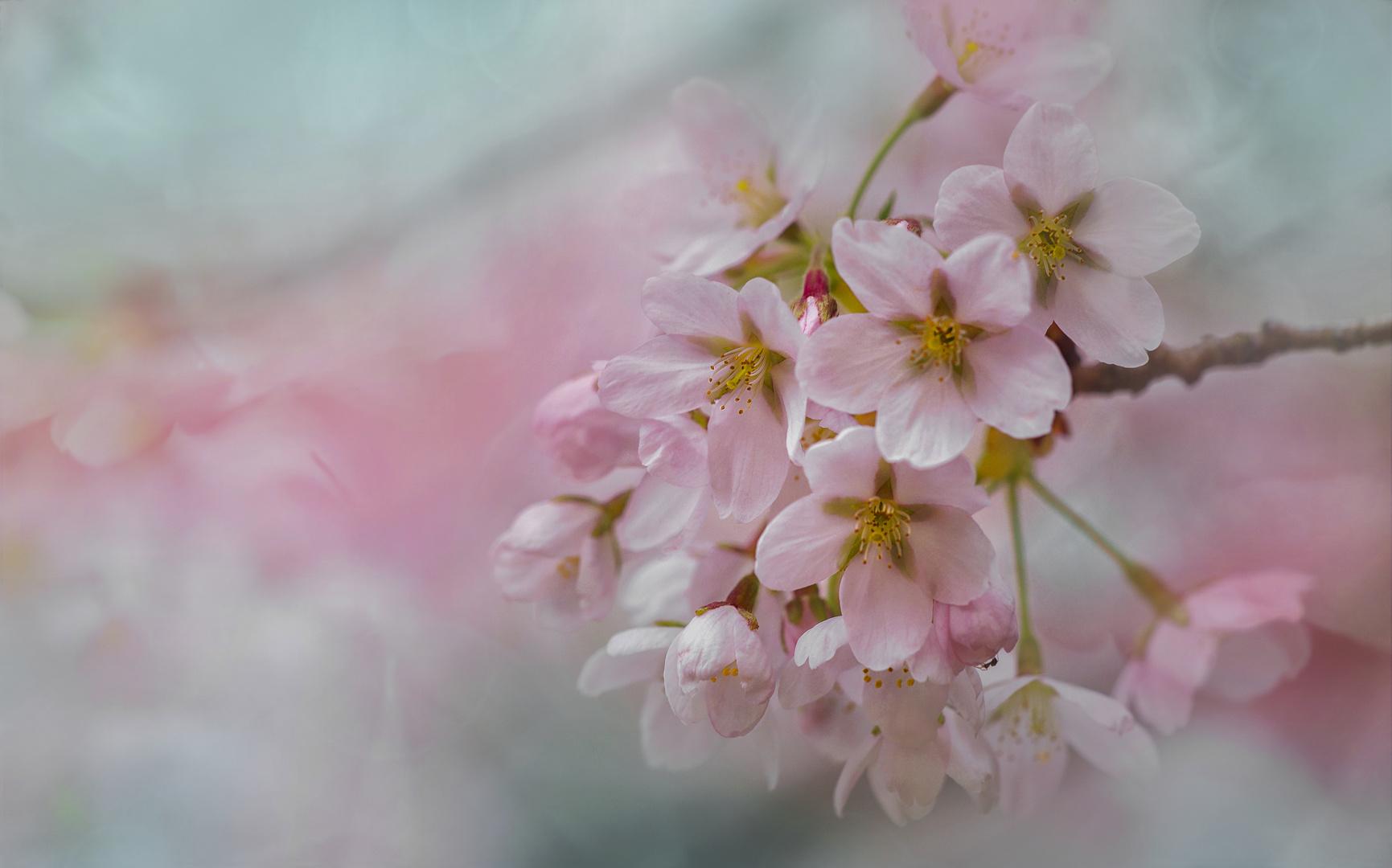 Viele kleine Frühlingsblüten