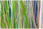 Viele kleine Jagdspinnen