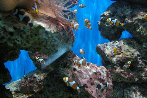 Viele kleine Nemos