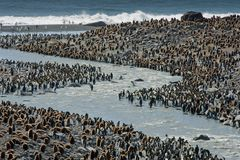 Viele Pinguine
