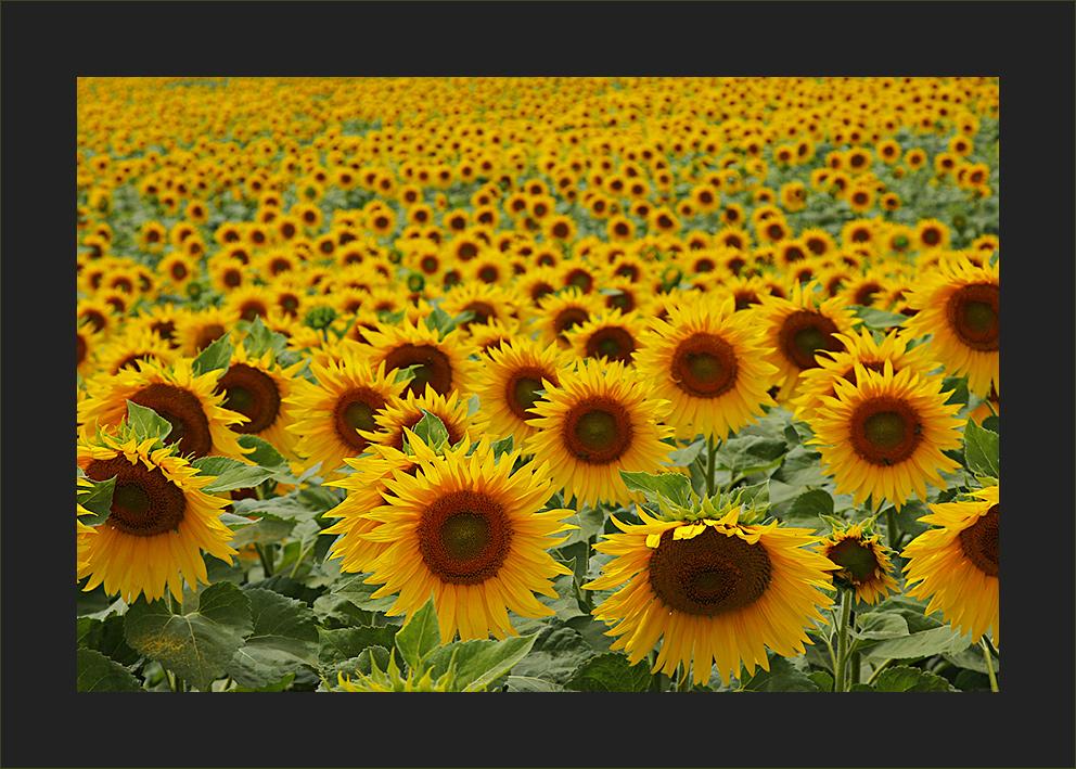 viele Sonnen erhellen den Tag
