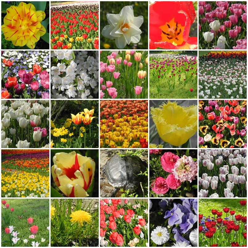 Viele Tulpen und andere Blüten und eine Schildkröte in den Gärten der Welt
