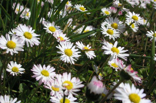 Viele viele Blüten