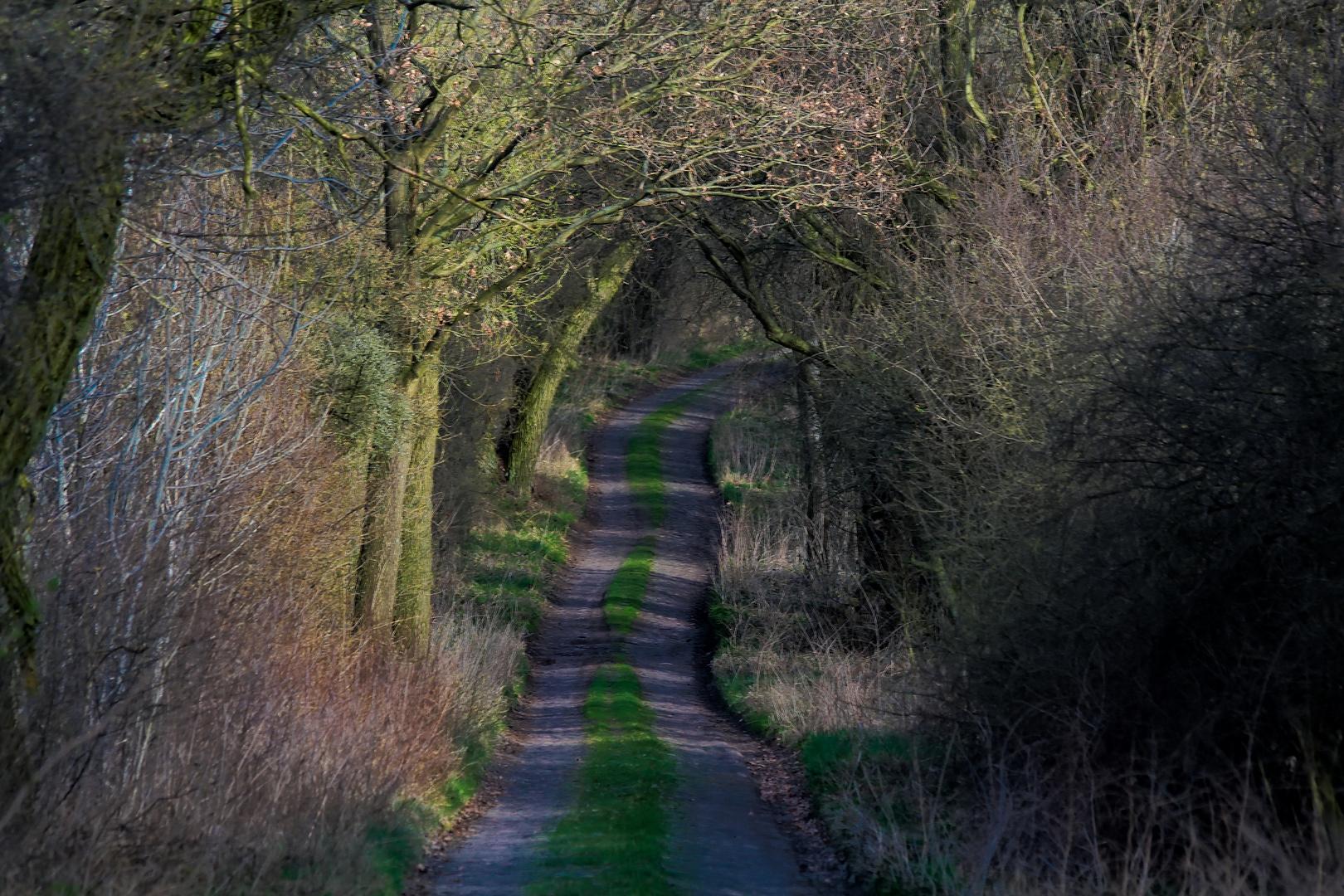 Viele Wege führen nach Hause ....