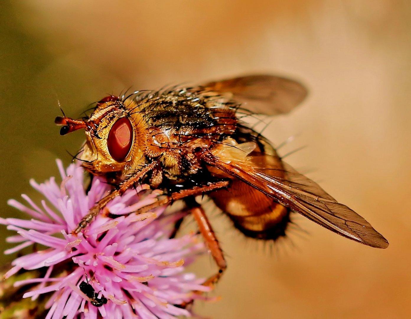Vielleicht eine Fliege - aber gelblich ???
