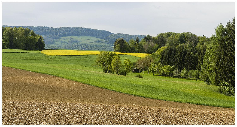 Vielseitige Ajoie (Jura)