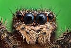 Vier Augen...