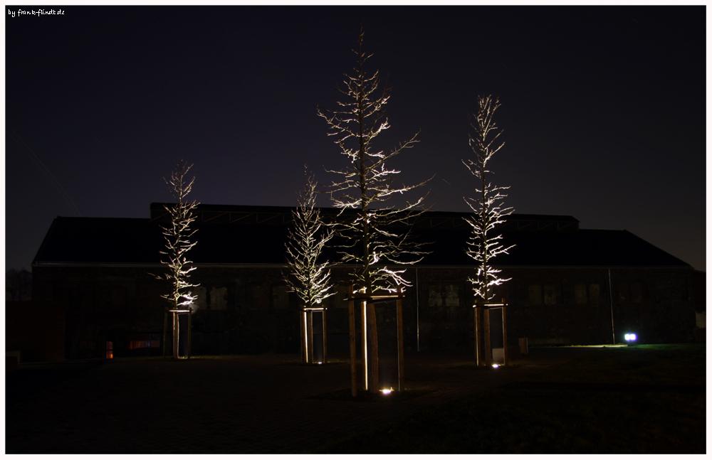 Vier Bäume....