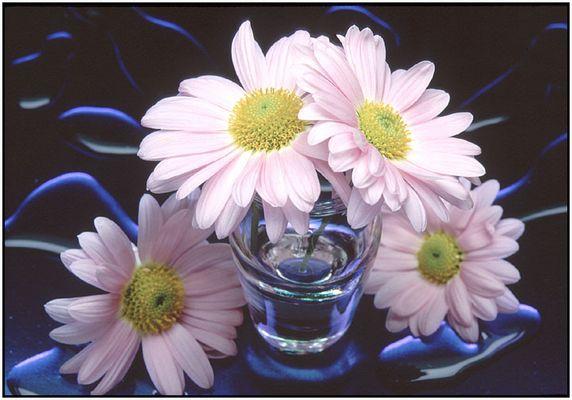 """""""Vier Blüten,Vase und Wasser"""""""
