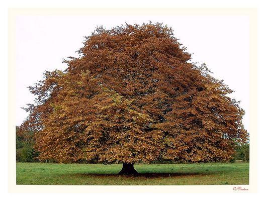 ** ** Vier -- Jahres -- Zeiten -- Baum ** **