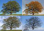 Vier Jahreszeiten 2.0