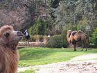 Vier Kamele im Fokus des jeweiligen Betrachters