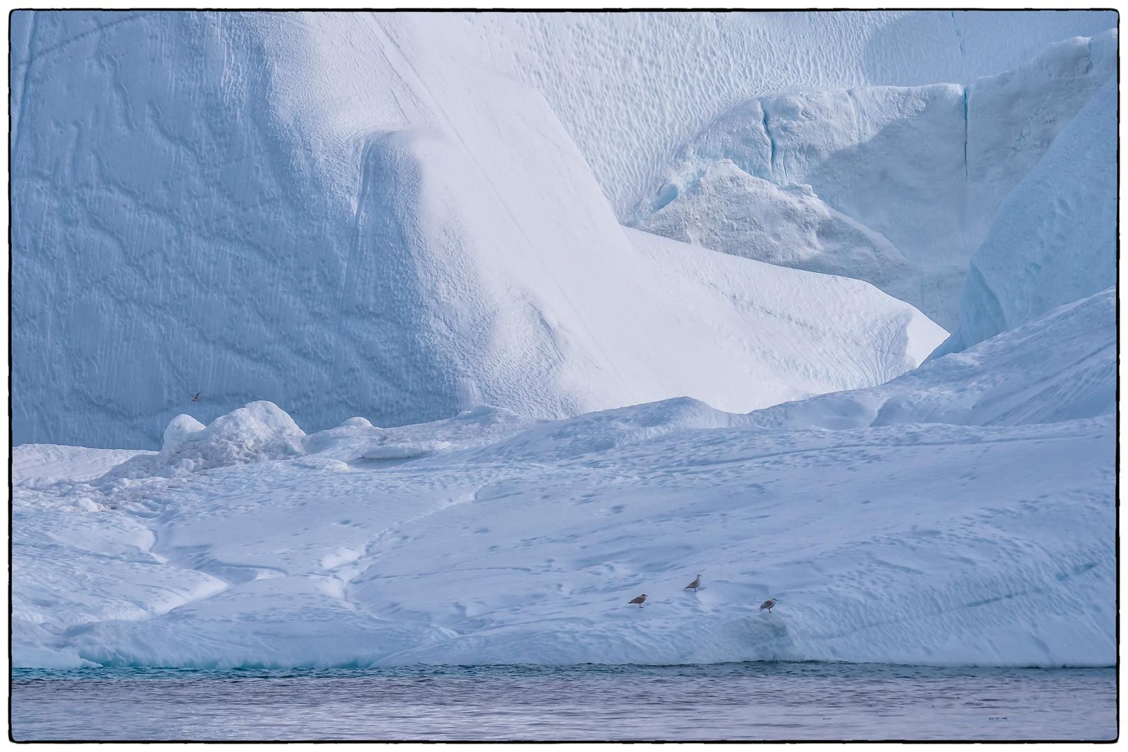 Vier Möwen im Eis
