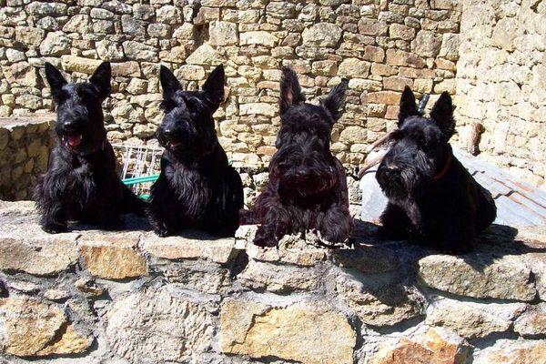 Vier Schotten in der Bretagne