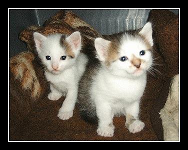 Vier Wochen alte Katzenbabys