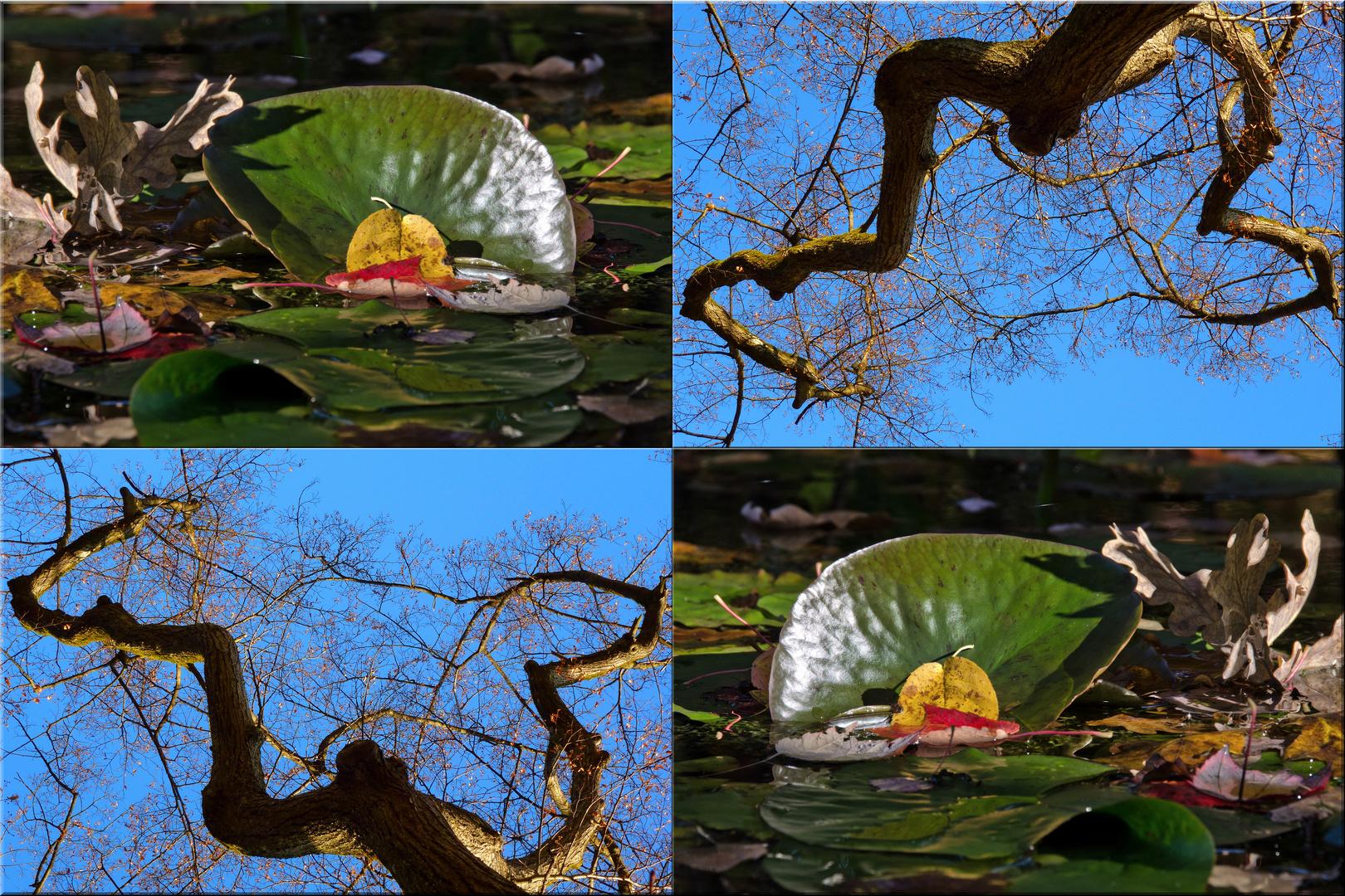 "Viererbild ""Herbstmetamorphose"""