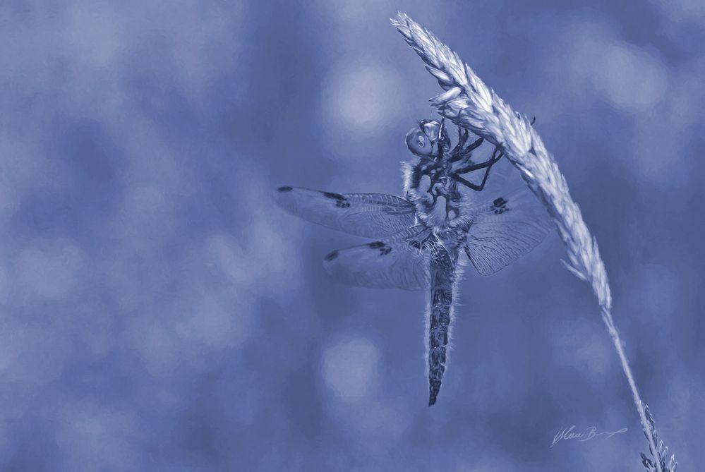 Vierflecklibelle als blaues Gemälde