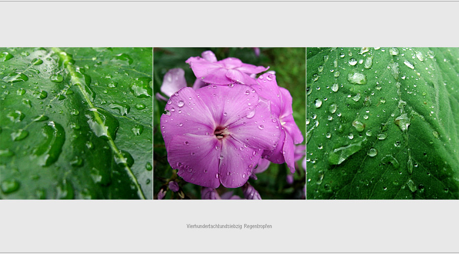 Vierhundertachtundsiebzig Regentropfen