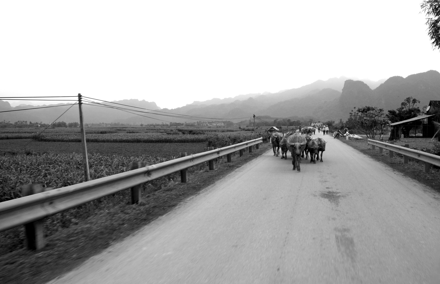 Vietnamesisches Landleben