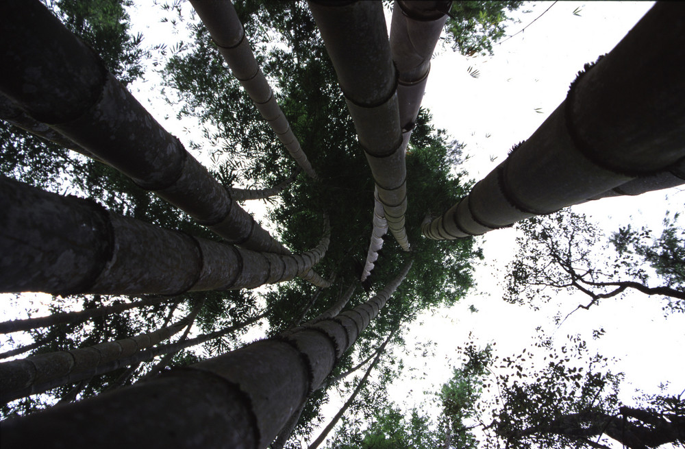 view in bamboo