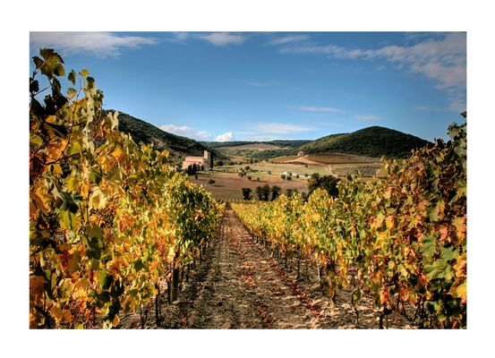 Vigne di Sant'Antimo