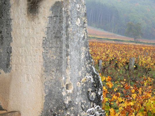 vignes à Meusaut
