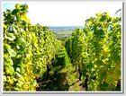 Vignes donnant sur le village lointain !
